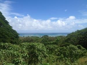 ハワイ クアロア牧場からの景色