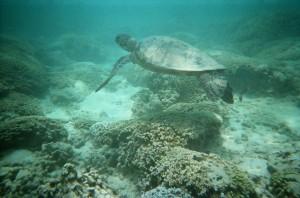 天国の海サンドバー カメ