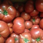 トマトづくし